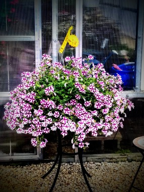 Lost Lake Acres Greenhouse W11534 County Highway DE, Fall River, WI 53932 (920) 484-6044 (18)